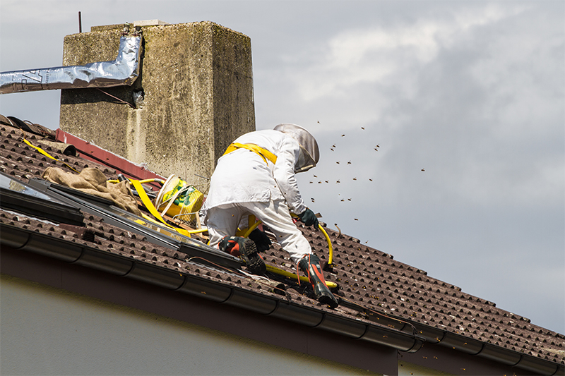 Bee Pest Control in Harrogate North Yorkshire